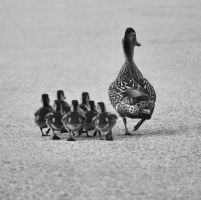 Make Way For Ducklings by Xandriia1