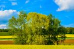Tree-View 1 by AzrahlPhotography