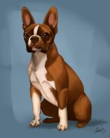 Oz the Boston Terrier Commission by CharReed