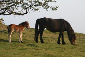 Mother and Foal by witchfinder-stock