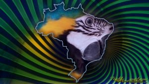 Arara Brasil Wallpaper by renatofraccari
