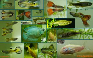 All my fish by cuypersiris