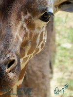 Giraffe - V by BelievePhotography