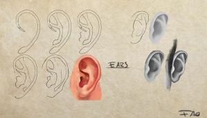 Ears study by FelFortune
