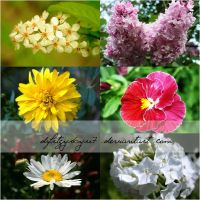 Pack flowers stock-1 by dfrtgyr6yu7