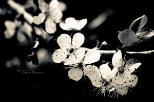 .When spring comes again. by shhilja