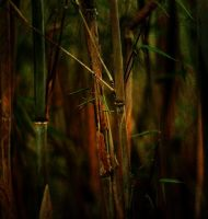 my old bamboo by awjay