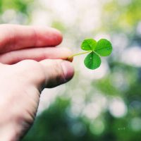 .: luck clover :. by all17