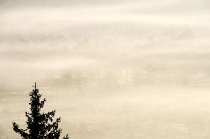 8.9.2014: Tree, Fog and Forest by Suensyan