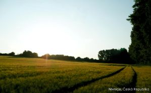 Somewhere in the Field by Haban