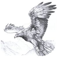 Aquila chrysaetos II by harpyja