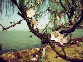 Flowers by the lake by Laura-in-china