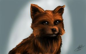Brown Small Puppy by MelyoraMel