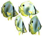 Butterfly Fish PNG Stock by Roys-Art