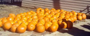 Pumpkins by IcecreamPopsickles