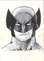 Wolverine by AdamBayes