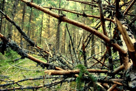 Forest series-Russian forest5 by takiostavim