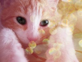 Chaton by Onlystar