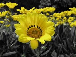 Spring yellows by jayd91