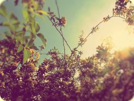 Lost looking into the springtime sky by x--photographygirl