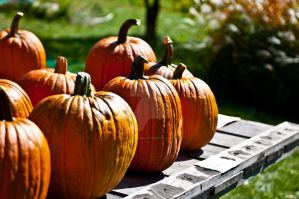 Pumpkins by Thors-Hammer77