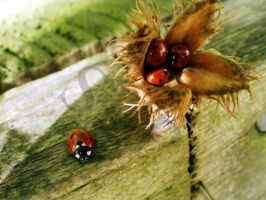 Ladybirds - in colour by shadowlight-oak