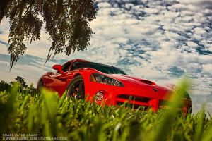 Snake in the Grass by notbland