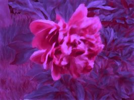 Evening peony by svet-svet