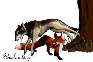 Request: Fox and wolf playing by Baka-Inu-Ninja