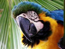 Curious Macaw by josecarli