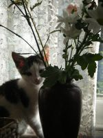 A Kitten with Flowers by letmeusemyname
