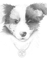 Lovable, fluffiest, most cutest puppy ever!! by Aussie0
