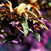 Leaves by anotherphilip