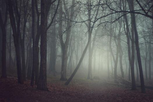 Foggy Day by Eredel