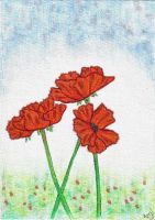 Poppies by AprilMaybe