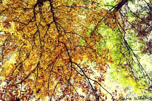 Fall Time is the Best Time by FarorePhotography