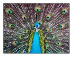 Tropical Feathers by MarkioS14