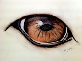 Wolf Eye by Vanzza