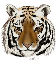Tiger Sketch by ReeseS8