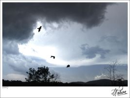 birds.on.storm.hdr by theartr