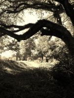 Through the woods.. by beth52594