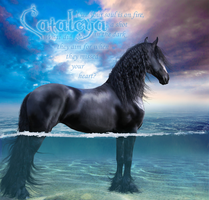 Cataleya Grown-up - The Secret by HorseWhisperer101