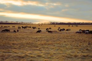 Herd of horses in field by Tumana-stock