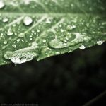 Water Drops. by AnimalsAndNatureClub