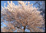 Snow Tree by TheAcolyte
