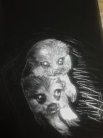 Scratchboard Meerkats by beauty-to-pain