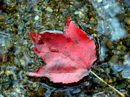 water leaf by bambi1964