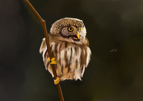Owl on a stick by Jojj3