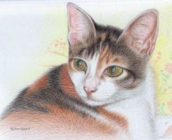Cat in colour pencil by httpecho