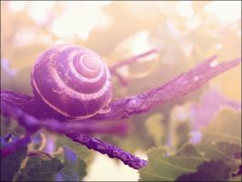 purple snail by Lenna3